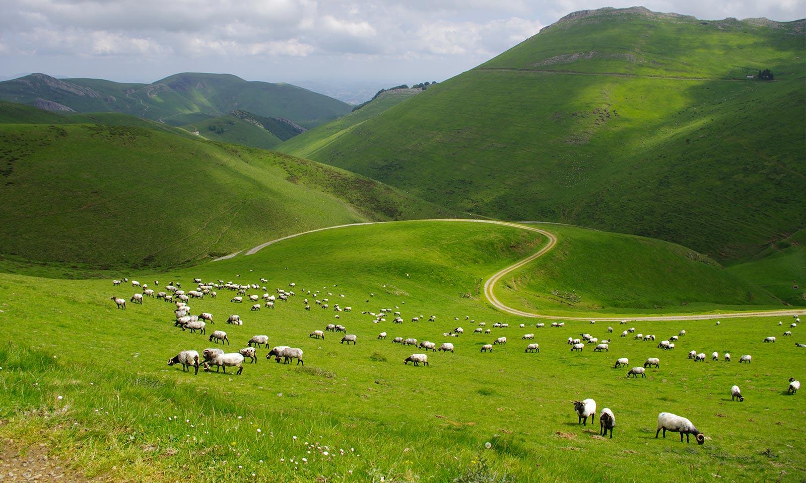 Accueil ATR - Paysage de montagne avec des moutons, un chemin et un ciel nuageux - Pays Basque France - Chamina ©Pascal Saint Jean